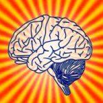柔らかな脳をつくる必須脂肪酸